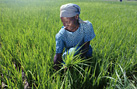 Developing a local economy thanks to agriculture (Picture: FAO)